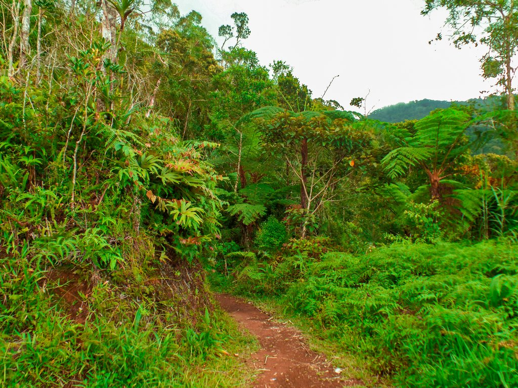 """< img src=""""trail.gif"""" alt=""""trail at the northen philippines"""">"""