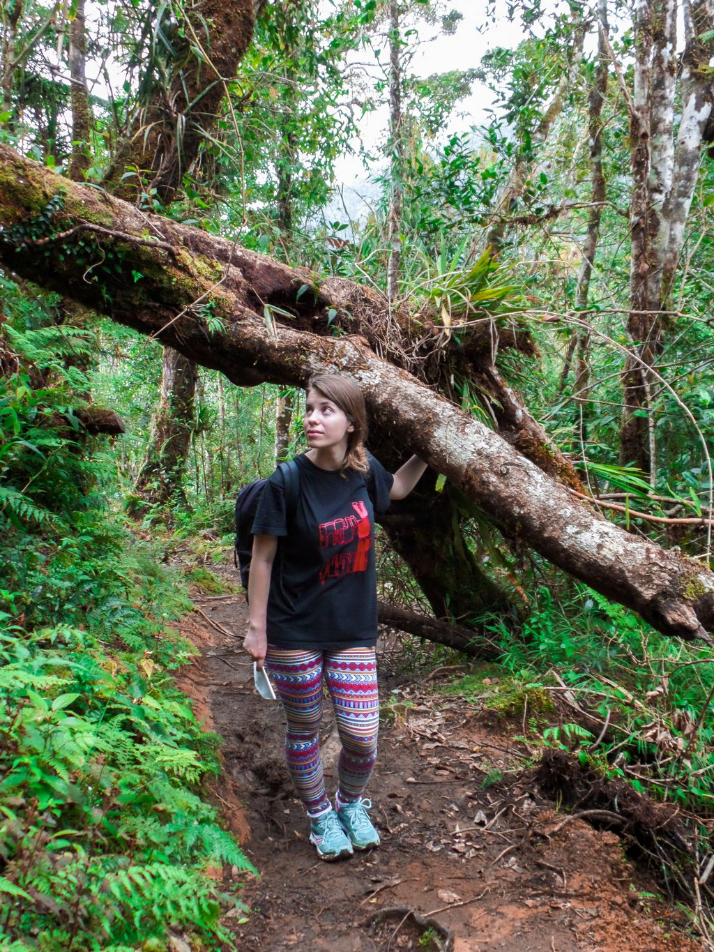"< img src=""young woman.gif"" alt=""young woman on a trail in the northen philippines"">"