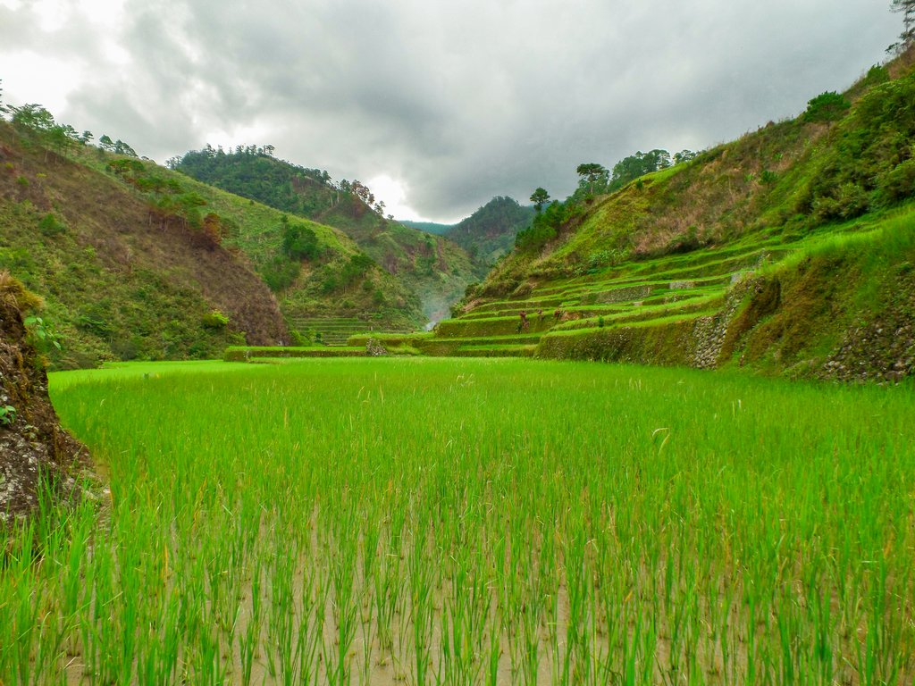 "<img src=""rice terraces.gif"" alt=""rice terraces in the northen philippines"">"
